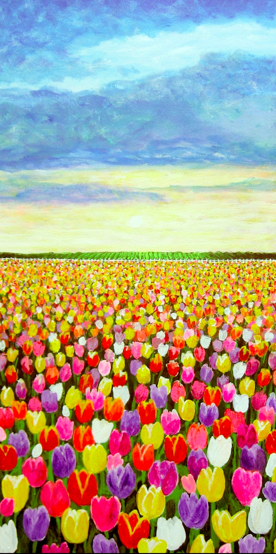"""Morning Tulips"""