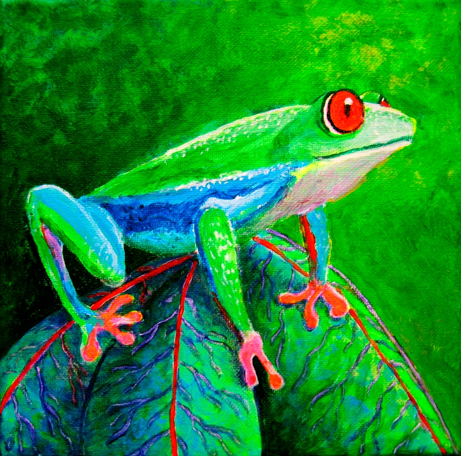 """Red-Eyed Tree Frog"""